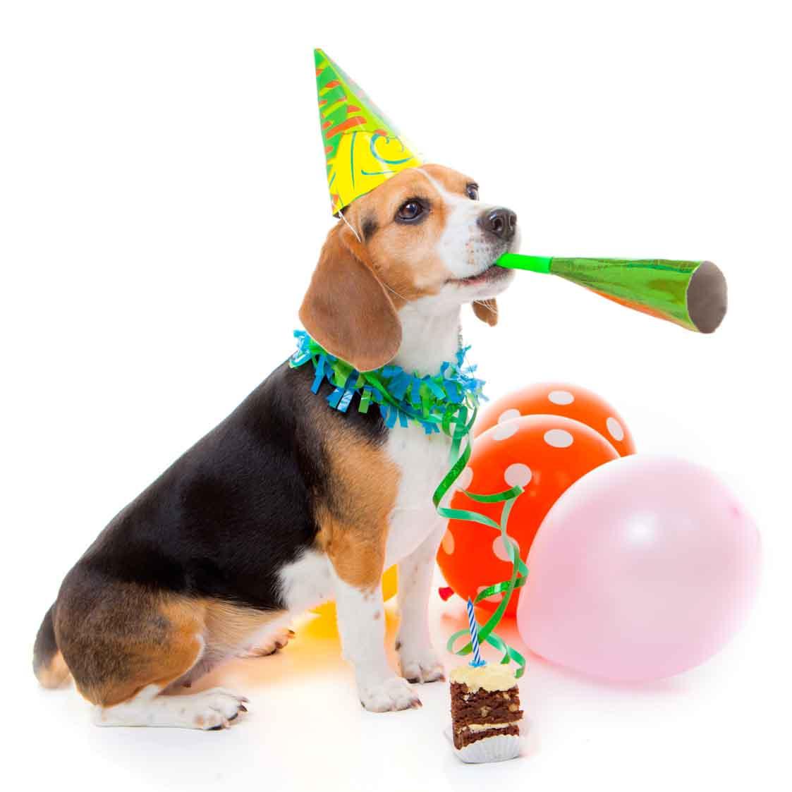 Картинки телефон, картинка с днем рождения бигль